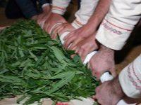 Обработка листьев и скручивание иван-чая
