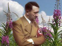 Почему Гитлер уничтожил фабрику иван-чая