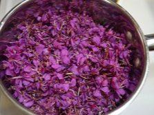 Цветки иван-чая для варенья