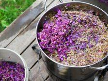 Как сделать сок из иван-чая