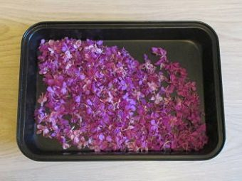 Цветы иван-чая на противне