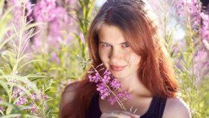 Полезные свойства, вред и противопоказания иван-чая