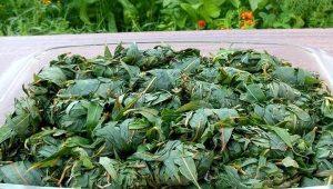 Как ферментировать иван-чай в домашних условиях?