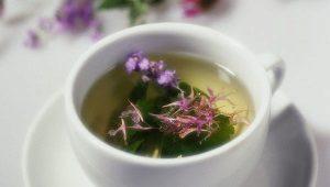 Отвары, настои и соки иван-чая при лечении болезней