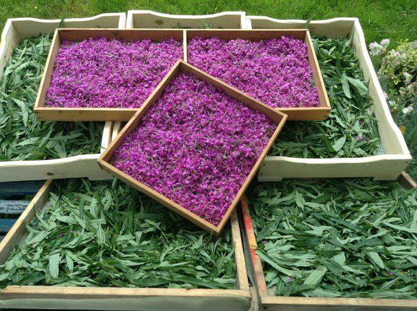 Какие цветы можно сушить для чая