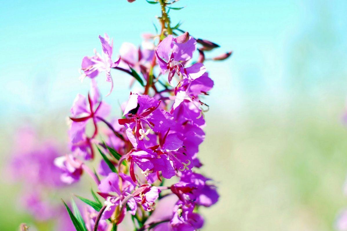 анна семенович рекламирует средство для потенции
