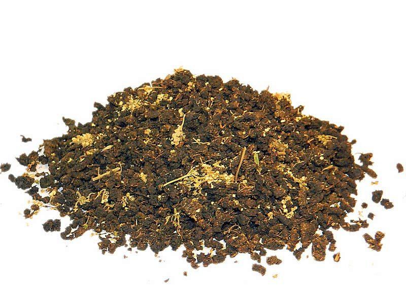 Чай из таволги лабазника ферментированный своими руками