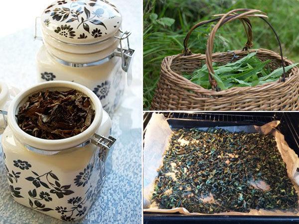 как заготовить иван чай на зиму