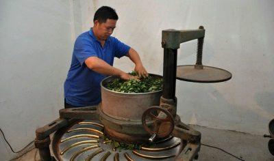 Машина-роллер для гранулирования иван-чая