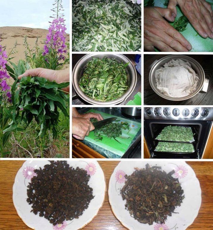 кипрей иван чай заготовка в домашних условиях